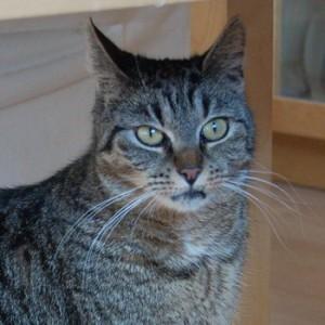 Foto von Emma, der Katze